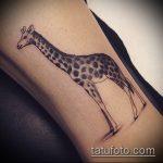 Интересный пример готовой татуировки жираф – рисунок подойдет для тату жираф на ноге