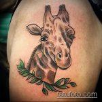 Зачетный вариант нанесенной тату жираф – рисунок подойдет для тату жираф на акуле