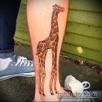 Зачетный пример нанесенной наколки жираф – рисунок подойдет для тату жираф акварель