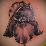 Интересный пример готовой тату ирис – рисунок подойдет для тату ирис на запястье