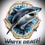 Крутой пример эскиза татуировки АКУЛА – рисунок подойдет для тату акула якоремтату акулы груди