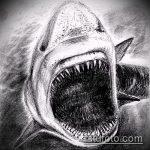 Прикольный вариант эскиза тату АКУЛА – рисунок подойдет для пасть акулы тату