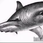 Интересный пример эскиза тату АКУЛА – рисунок подойдет для тату акула на руке