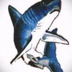 Прикольный пример эскиза тату АКУЛА – рисунок подойдет для тату акула на руке