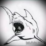 Интересный пример эскиза татуировки АКУЛА – рисунок подойдет для тату акула молот