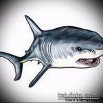 Классный вариант эскиза наколки АКУЛА – рисунок подойдет для пасть акулы тату