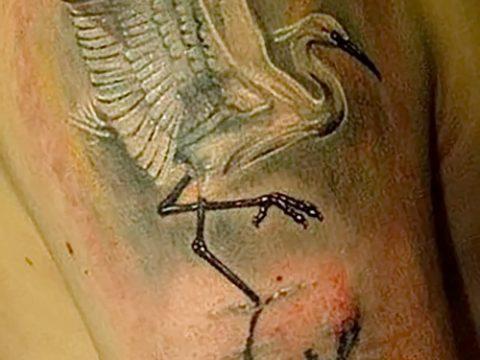 Интересный пример существующей тату аист – рисунок подойдет для тату аист или журавль