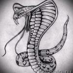 Классный вариант тату эскиз змеи – можно использовать для тату змей плече
