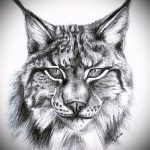 Оригинальный вариант тату эскиз рысь – можно использовать для тату рысь на бедре