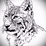 Интересный вариант тату эскиз рысь – можно использовать для тату рысь на бедре
