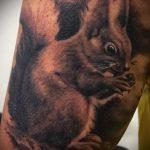 Крутой пример нанесенной татуировки белка – рисунок подойдет для тату белка акварель