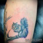 Уникальный пример выполненной татуировки белка – рисунок подойдет для фото тату белка ездит в такси