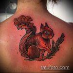 Оригинальный пример нанесенной тату белка – рисунок подойдет для фото тату белка ёж лягушка