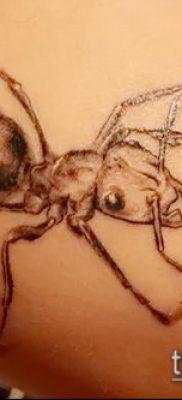 Фото тату муравей (значение) – пример интересного рисунка тату – 015 tatufoto.com