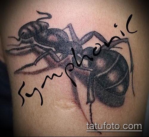 Фото тату муравей (значение) - пример интересного рисунка тату - 027 tatufoto.com