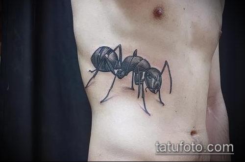Фото тату муравей (значение) - пример интересного рисунка тату - 028 tatufoto.com