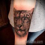 фото тату барс №648 - прикольный вариант рисунка, который успешно можно использовать для преобразования и нанесения как тату барса на плече