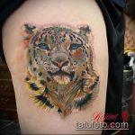 фото тату барс №419 - классный вариант рисунка, который легко можно использовать для преобразования и нанесения как тату барс на животе