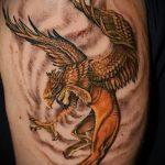 фото тату грифон №45 - классный вариант рисунка, который удачно можно использовать для преобразования и нанесения как тату грифон с щитом