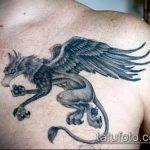 фото тату грифон №779 - уникальный вариант рисунка, который удачно можно использовать для доработки и нанесения как тату грифон птица