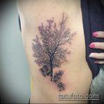 фото тату дерево №73 - классный вариант рисунка, который хорошо можно использовать для преобразования и нанесения как тату дерево на животе