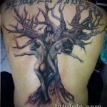 фото тату дерево №784 - крутой вариант рисунка, который удачно можно использовать для преобразования и нанесения как тату деревья на предплечье