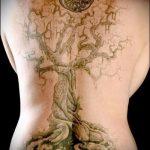 фото тату дерево №877 - интересный вариант рисунка, который успешно можно использовать для переработки и нанесения как тату дерево и луна