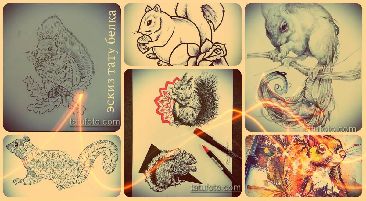 Эскизы тату белка - интересные рисунки для основы татуировки