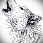 эскиз тату воющий волк №733 - достойный вариант рисунка, который легко можно использовать для преобразования и нанесения как тату воющий волк на предплечье