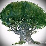 эскиз тату дерево №624 - классный вариант рисунка, который удачно можно использовать для переработки и нанесения как ворон и дерево тату
