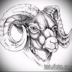 эскиз тату козел №376 - интересный вариант рисунка, который хорошо можно использовать для переделки и нанесения как тату череп козла