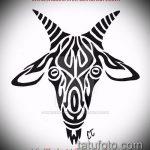 эскиз тату козел №683 - эксклюзивный вариант рисунка, который хорошо можно использовать для переработки и нанесения как тату череп козла