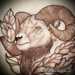 эскиз тату козел №536 - достойный вариант рисунка, который успешно можно использовать для преобразования и нанесения как тату череп козла