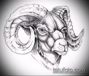 эскиз тату козел №140 - достойный вариант рисунка, который успешно можно использовать для переделки и нанесения как тату череп козла