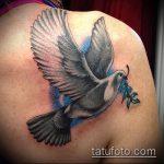 фото тату голубь №595 - интересный вариант рисунка, который успешно можно использовать для доработки и нанесения как тату на груди голуби