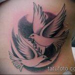 фото тату голубь №637 - эксклюзивный вариант рисунка, который удачно можно использовать для переработки и нанесения как тату на груди голуби