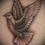 фото тату голубь №481 - уникальный вариант рисунка, который хорошо можно использовать для переработки и нанесения как тату голубь на руке