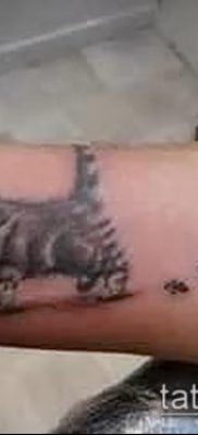 фото тату кошачьи лапки (значение) – пример интересного рисунка тату – 025 tatufoto.com