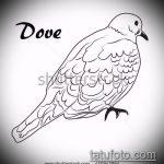 эскиз тату голубь №728 - достойный вариант рисунка, который хорошо можно использовать для доработки и нанесения как тату на груди голуби
