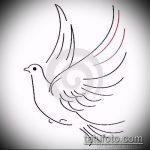 эскиз тату голубь №571 - классный вариант рисунка, который хорошо можно использовать для переделки и нанесения как тату голубь с гранатой