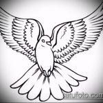 эскиз тату голубь №269 - интересный вариант рисунка, который хорошо можно использовать для преобразования и нанесения как тату голубь на руке