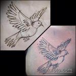 эскиз тату голубь №506 - крутой вариант рисунка, который удачно можно использовать для переработки и нанесения как голубь мира тату