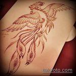 эскиз тату жар птица №471 - крутой вариант рисунка, который удачно можно использовать для преобразования и нанесения как татуировка жар птица на животе
