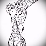 эскиз тату жираф №904 - уникальный вариант рисунка, который легко можно использовать для переработки и нанесения как жираф татуировка на ноге