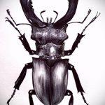 эскиз тату жук №48 - классный вариант рисунка, который хорошо можно использовать для переработки и нанесения как татуировка жук на шее