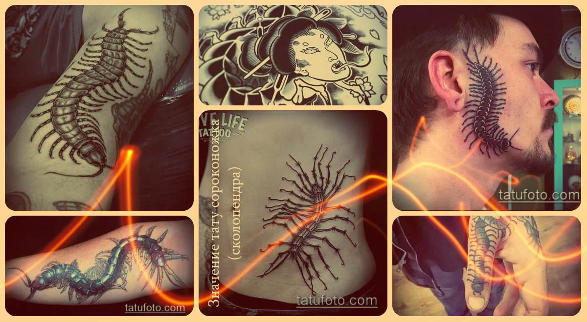 Значение тату сороконожка (сколопендра) - оригинальный примеры готовых татуировок фото