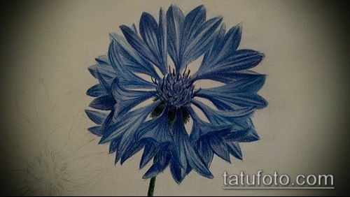 фото тату василек (cornflower tattoo) (значение) - пример рисунка - 012 tatufoto.com