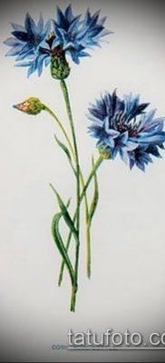 фото тату василек (cornflower tattoo) (значение) – пример рисунка – 016 tatufoto.com