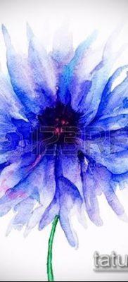 фото тату василек (cornflower tattoo) (значение) – пример рисунка – 018 tatufoto.com