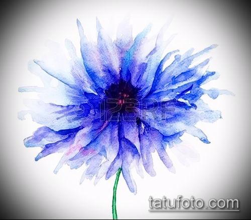 фото тату василек (cornflower tattoo) (значение) - пример рисунка - 018 tatufoto.com
